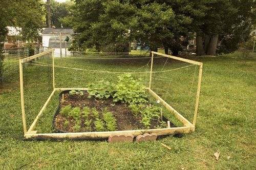 Garden Protection